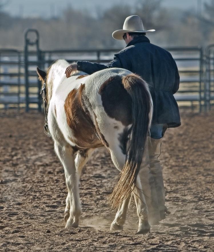 cowboy-horse-pony-western-53011