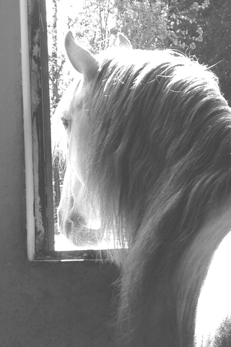 Hestportugal2017.png
